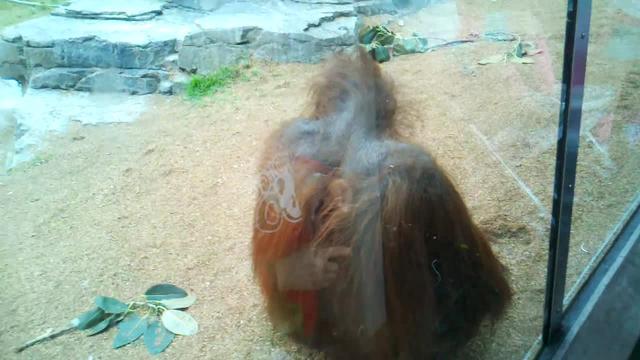 Ape Cam