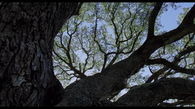 Tree of Life, The (Malick, 2011) — Youth in a Snapshot