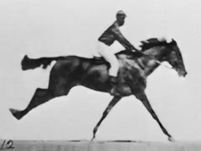 Animation created from photos by Eadweard Muybridge