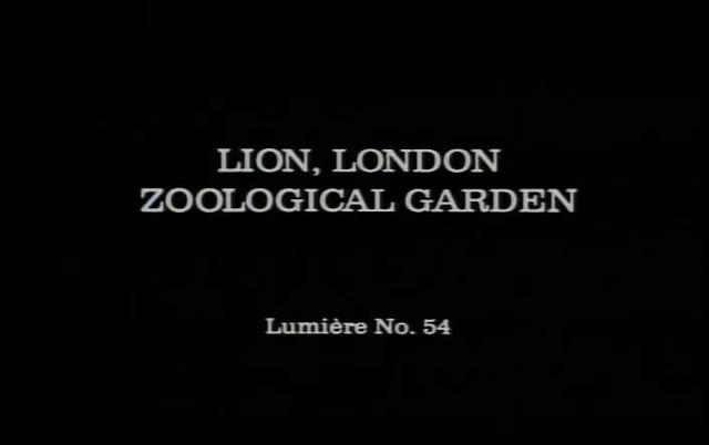 Lion, London Zoological Garden (1895)