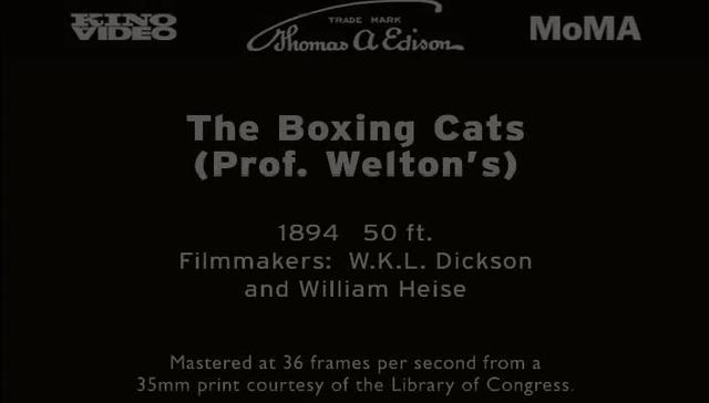 The Boxing Cats (Prof Welton's) (1894)