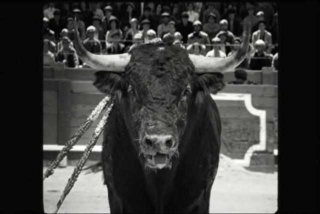 Blancanieves (2012) - Bull attack