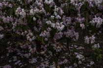 DeSouza_Florescence #06